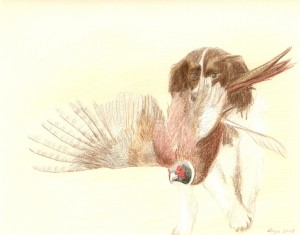 Spanie retrieving pheasant, coloured pencils, A3