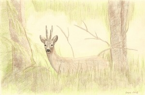 Roe buck in the woods, coloured pencils, A3