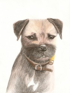 Border terrier, Pencil on paper, A4