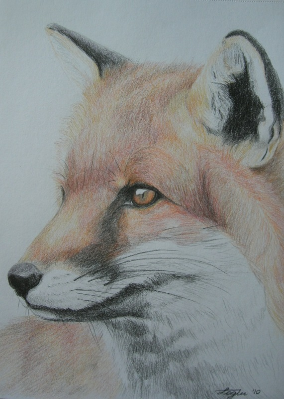 Fox portrait, drawing, A4;