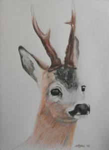 Roebuck portrait by Anna Login
