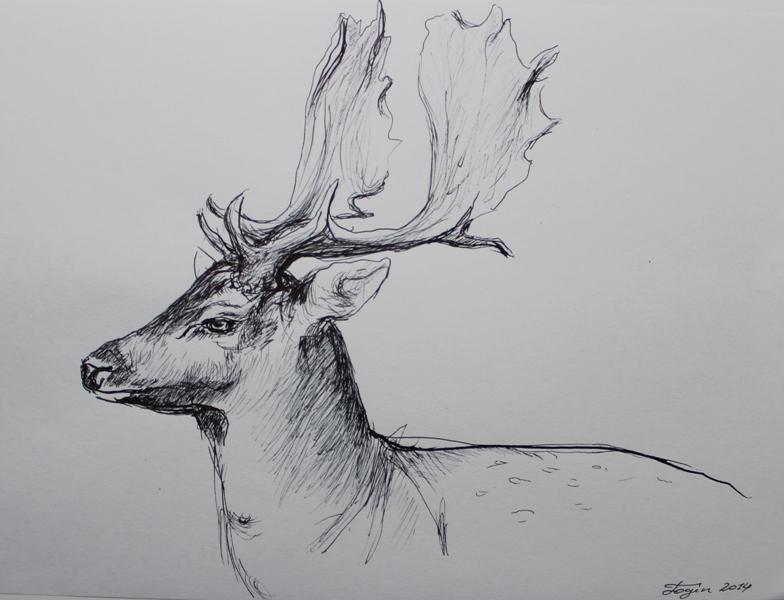 Line Drawing Deer : Deer and fox typography set illustrations creative market